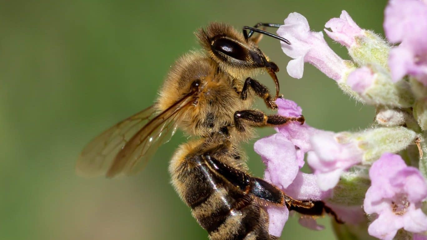 Sorge für die Biene ist Umweltschutz.